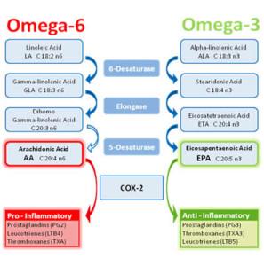 omega-3-6